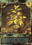 it-002_premier_yellow_herb